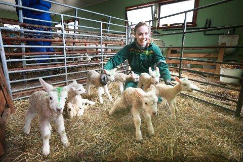 Sauepasser Sabina Gowert tar varsomt hånd om de sju lammene på gården til sauebonde Frank Reidar Simonsen på Oldereid.