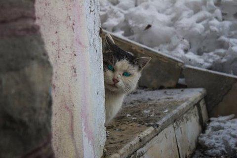 Titusener av hjemløse katter lider i Norge, og mange taper kampen mot kulden.