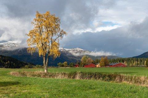 Nordland må gjøre sitt for å bevare artsmangfoldet.