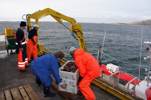 Krabbe i Bodø: I 2010 ble det stopp på omsetting av taskekrabbe fra mottaket til Bodø Skalldyr AS på Langstranda. Nå kan det se ut til at det blir ny rettssak hvor fiskerne krever flere millioner i oppreisning.