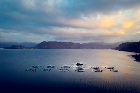 Krevende tider: Også havbruksnæringen opplever krevende tider som følge av korona-epidemien. Lakseeksporten berges delvis av en lav kronekurs. Dette er oppdrettsanlegget til Wenberg i Skjerstadfjorden.