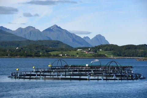 Bedre betalt: Havbrukskommunene ligger an til å få bedre betalt for å stille fjorder og sjøarealer til disposisjon for oppdrettsnæringen.