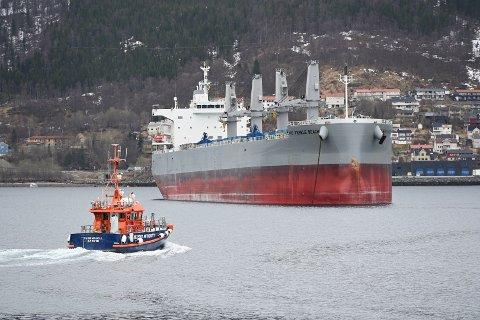 Fire i besetningen, inkludert kapteinen, er innlagt etter smitteutbruddet på malmskipet Pebble Bech, som nå ligger til kai i Narvik. Foto: Jørn Indresand / Fremover / NTB
