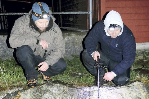 Kim Rasmussen (t.v.) og Geir Andreassen speider etter tangbrosmer lenge etter normal leggetid. Artsjegere må regne med en del seine netter.