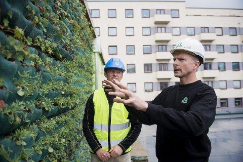 Prosjektleder i Wikholm, Anders Garnes, forklarer prosjektleder i Strand, Audun Nygard, hvilke egenskaper de ulike plantene på den grønne veggen har. – Vi har brukt vår fagkunnskap ved plantevalget, sier Garnes.