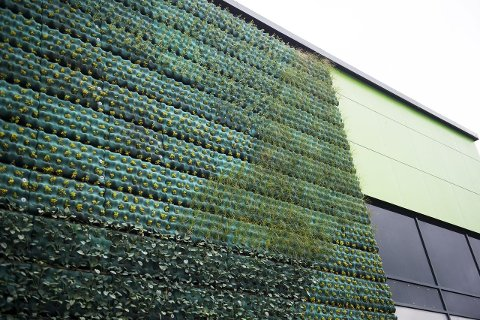 Åtte ulike busker og stauder dekker totalt 350 kvadratmeter av veggene på Birs terminal i Jekteviken.