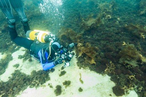 Atle Ove Martinussen tok de første dykkene med seg et vanntett kompaktkamera ned til havets bunn, men var ikke fornøyd med at han ikke fikk brukt alt av fotokunnskaper. Det var da han bestemte seg for å investere i godt utstyr slik at han kunne ta meg seg det profesjonelle utstyret under vann.
