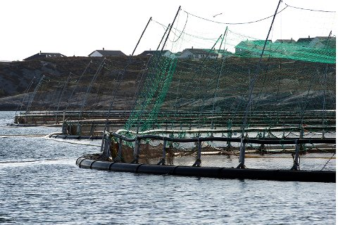Lerøy Vests matfiskanlegg ved Rongøy i Øygarden.
