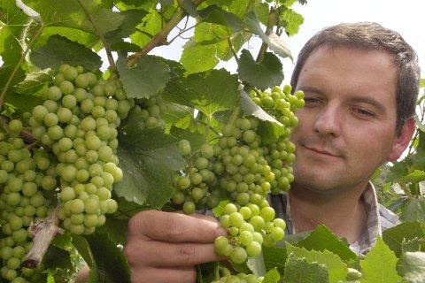 Riesling-druen trives aller best i kjølige områder som likevel har nok sol til at den får vist sine unike kvaliteter - som i Tyskland, Østerrike og i franske Alsace.