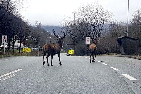 Kine Holt Johansen tok dette bildet av de to dyrene lørdag morgen.