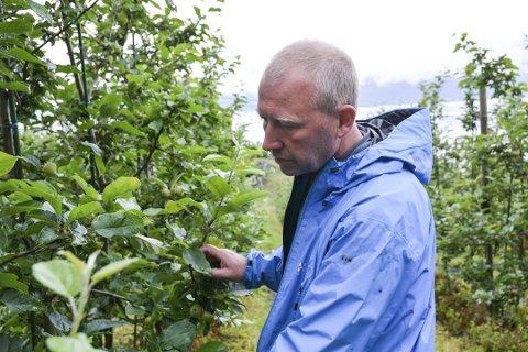 Tre minutter med hagl: Kjetil Lerfall skjønte at det ikke kom til å se bra ut på eplene da den kraftige haglbygen kom forrige tirsdag.