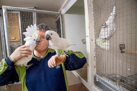Leon Fjæreide (45) har hagen full av papegøyer: – Det er kanskje flere enn de fleste har, ler 45-åringen.