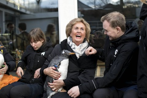 Tidligere ordfører i Bergen, Trude Drevland, er fadder for en av pingvinkyllingene på Akvariet. – Dette er veldig gøy, smilte hun bredt.