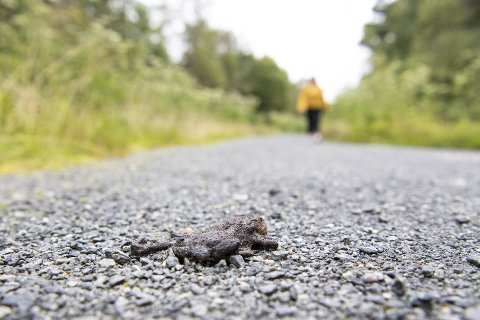 BA fant flere døde padder i Hordnesskogen fredag.