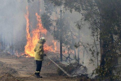 Hundrevis av branner har herjet Australia i høst og nå inn på nyåret, og brannmannskapene kjemper en fortvilet kamp.