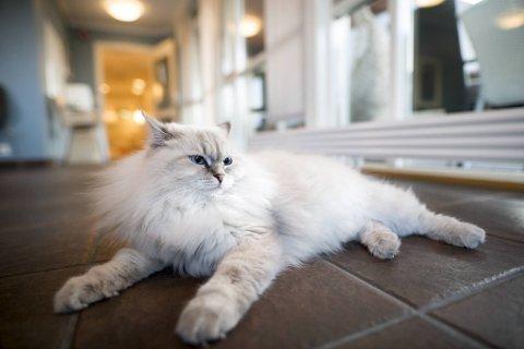Gizmo er en skikkelig kosepus og trives som den nye stjernen på sykehjemmet.