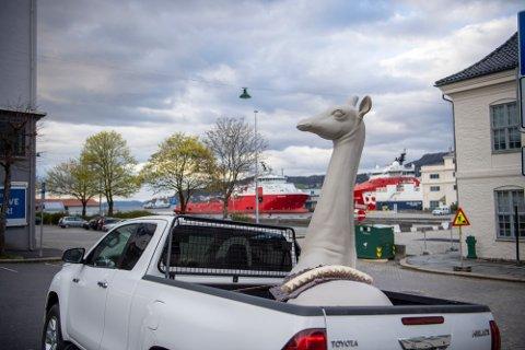 Slik så det ut da de to kunstnerne fraktet sjiraffskulpturen Fred til Bergen.