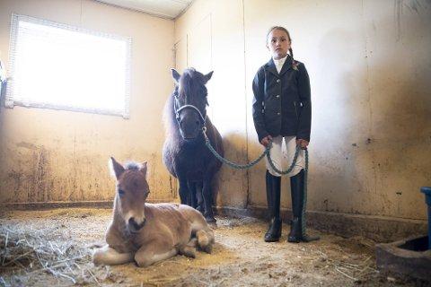 Tonje Ellingsen (9) er begeistret for det nye føllet, Eitil som ble født på Solbakken gård forrige uke. Selv fikk hun ponnien Pia, som hun holder, da hun var ti dager gammel.