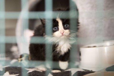 Lille Månestråle er en av mange katter som har blitt hentet av Dyrebeskyttelsen Norge i det siste. Han ble funnet skitten og sliten sammen med søster og mor på Hylkje.