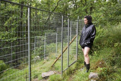 I denne innhegningen pleide hanene til Elaine Maltezos i Bergen Chicken Sanctuary å kose seg.