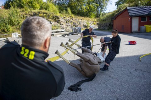 Thøger M. Tveit og Stig Rasmussen snur hesten sammen med Stine Larsen. Kjetil Ingvaldsen passer på hestens hode.