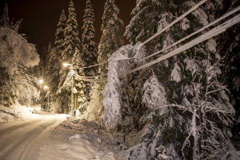 BKK var ute søndag kveld for å fjerne tung snø og grener som hang over strømledningene, slik som denne.