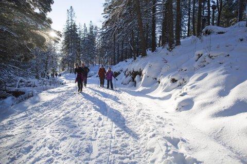 Det er mange som pleier å dra hit til skiløypene på Fløyen når snøen kommer. Slik så det ut i januar i 2015.