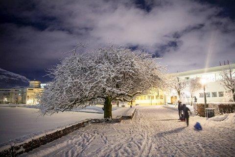 Idyllisk vinterbilde fra Bergen.