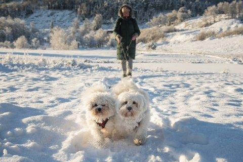 Nina Rasmussen på tur i kulden med hundene Kitty og Nusse.