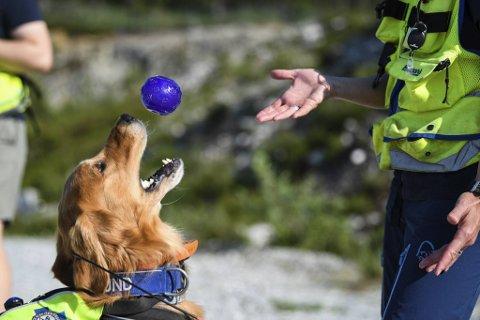 Oscar (5) får belønning av hundefører Wenche Listøl under trening. Nesten ukentlig deltar ekvipasjer fra Norske Redningshunder gratis i leteaksjoner i bergensområdet. Og gjør livreddende funn.