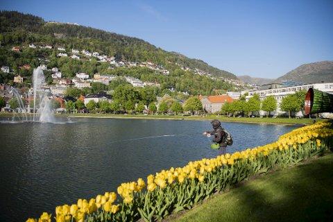 Det er gode dager i Bergen for tiden, både vær- og smittemessig.