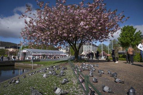 Det var 728 personer som testet seg i Bergen lørdag, og 870 som testet seg søndag (arkivfoto).