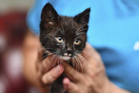 Den søte og raske kattungen har funnet roen på dyreklinikken.