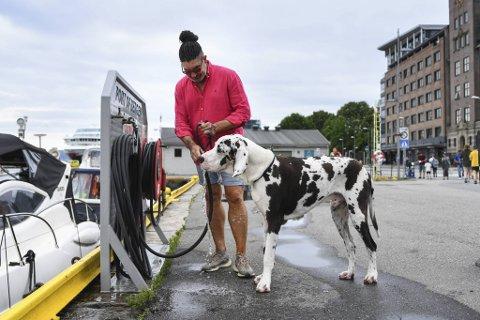 Søndag hadde Raul Barreras god plass til å lufte sin 83 kilo tunge grand danois på Bryggen. Her er det drikkepause. At han ikke kan kjøre elbilen sin her i sommer er han mer lunken til.