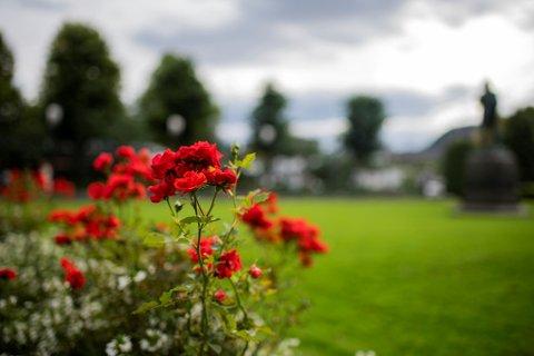 Ennå kan vi nyte blomstene som er igjen, før høsten for alvor setter inn.