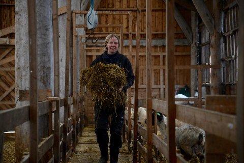 Lammingstid: Bodil Raustein kommer med nytt høy til sauene som nettopp har fått lam.