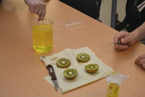Spennende kjemi: Biologi 2-elevene Mattias Boucher, Niklas Gamst Schjerven og Nils Gunnar Lindbo studerer hva som skjer når kiwi blir satt til gelé. De prøver med rå og kokt kiwi, og forskjellen er stor.