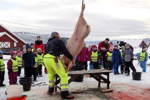Interessert publikum: Elever og barnehagebarn fra Nerstad fulgte ivrig med da Anders Fragått slaktet.
