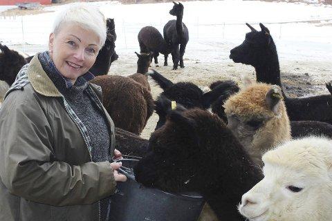 BUDEIA: Bente Buxrud er ansatt som koordinator. Hun eier tre av de rundt 60 alpakkaene.