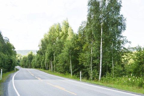 Grønn korridor: Deler av sigdalsveien er preget av grønne vegger mot elv og fjord.