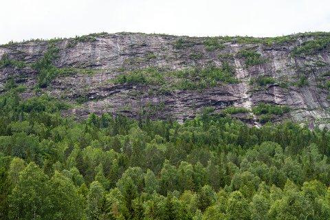 Frodig vernet skog under fjellet i Surtebergflaget naturreservat, Krødsherad kommune. Foto: Olav Thøger Haaverstad, Fylkesmannen i Buskerud