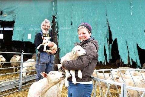 450 PÅ BEITE: Det er smil og glede i sauebingen over mange fine og store lam. Lindis og Svein Ingebo i Bingen skal slippe cirka 150 søyer og 300 lam på utmarksbeite. De håper at alle kommer hjem til høsten, men er litt spente.