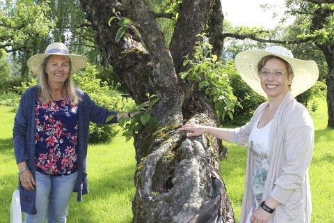 HISTORISKE EPLETRÆR: Det er noen av Nyfossums mange grønne herligheter som Hege Bendiksby og Helle Mikkelsen vil vise fram under hagefesten.