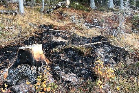 BÅL 1: Dette bålet befant seg i området mellom Langvann og Heståsfjell og ble slukket torsdag formiddag. Brannvesenet tror det har brent siden søndag.