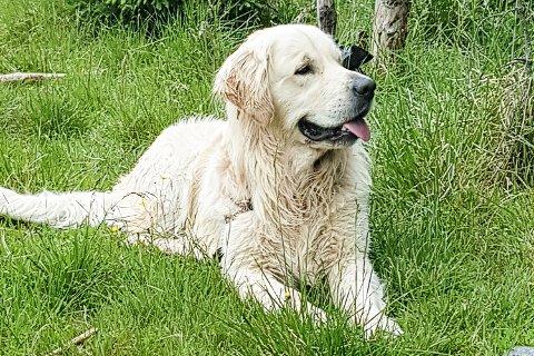 PÅ TIMEPLANEN: Ved Rosthaug videregående skole kan elevene fordype seg i hund til høsten.