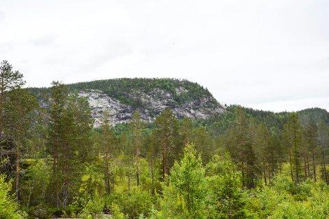 SKOGBRUKSSJEF: Elleve har søkt om å blir skogbrukssjef i Sigdal.