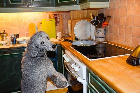 VRIDDE PÅ BRYTEREN: Hunden Sookie hoppet antageligvis opp med forlabbene og fikk vridd på bryterne på vei ned igjen.