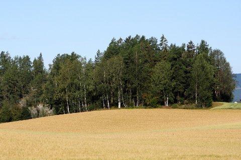 TRETOPP: I denne skaukrullen på Simostranda ønsker samboerparet Kari Skretteberg og Einar Holm å sette opp ei tretopphytte. Kommunens saksbehandlere mener de må finne seg et annet sted å sette opp hytta.