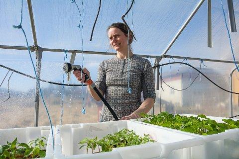 SÅTID: I disse dager forberedes grønnsakssesongen inne i drivhuset, der småplanter og spirer skal få best mulig vilkår til å vokse seg store og sterke.