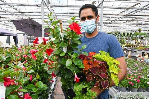 TRE FAVORITTER: De tre blomstersortene ynde, sort petunia og praktspragle er populære hos Sanni Singh på Daljit gartneri.